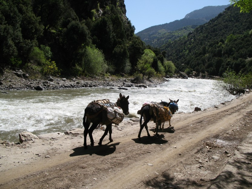 Donkeys follow the Kunar river south, Nuristan
